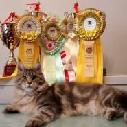 Выставка кошек «Рыбалка 2017» фотографии