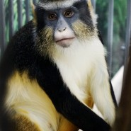 «Выставка обезьян» фотографии