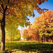 Праздничная программа  «Осенний букет» фотографии