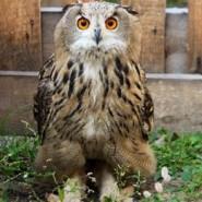 Тюменский зоопарк  фотографии