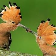 Фотоконкурс «Птичьи разговоры» фотографии