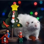 Мастер-класс «Год Крысы» фотографии