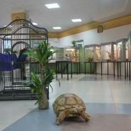 Выставка-зоопарк «Живые тропики» фотографии