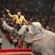 Цирковая программа «Шоу слонов великанов» фотографии