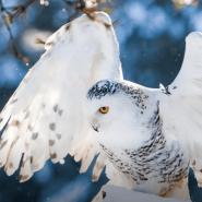 Выставка «Птицы Арктики» фотографии