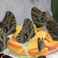 Выставка тропических бабочек в Тюмени 2020 фотографии