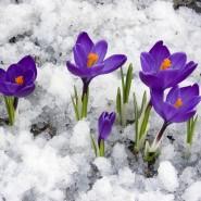 Праздник «Тюменская весна» 2018 фотографии