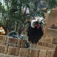 Контактный зоопарк «Теремок» фотографии