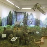 Выставка «Окно в природу» фотографии