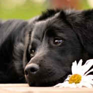 Выставка собак фотографии