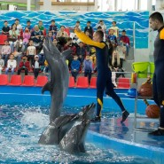 Шоу дельфинов  и белых китов «Тайна семи морей» фотографии