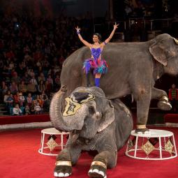Цирковая программа «Шоу слонов великанов»