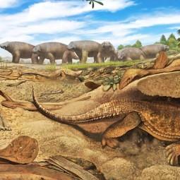 Цикл лекций «Занимательная палеонтология»