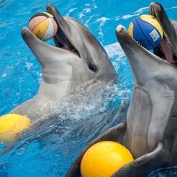 Шоу дельфинов  и белых китов «Тайна семи морей»
