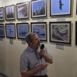 Фотовыставка «Птицы вокруг нас»