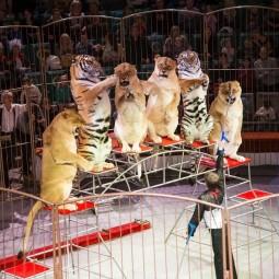Цирковое шоу «Легенда цирка»