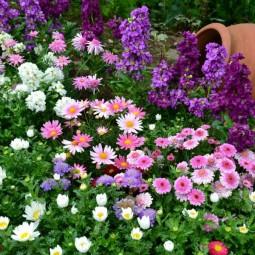 Фестиваль цветов «Na Ture»  2017