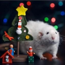 Мастер-класс «Год Крысы»
