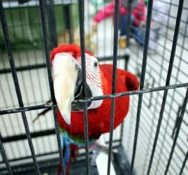 Выставка-зоопарк «Живые тропики»