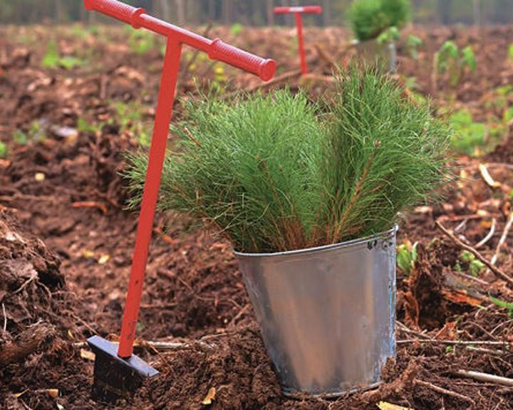 Всероссийский день посадки леса вТюмени 2017