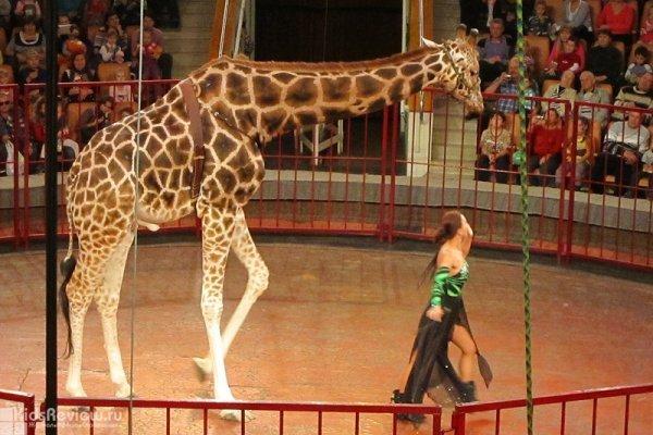 Цирковая программа «Гиганты Африки»