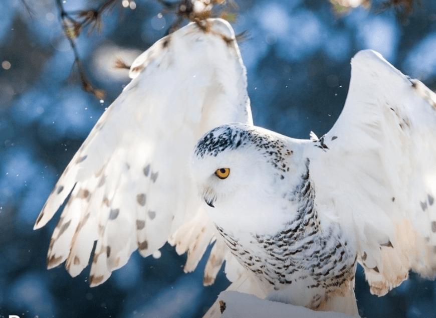 Выставка «Птицы Арктики»