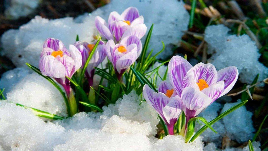 Праздник «Тюменская весна» 2018