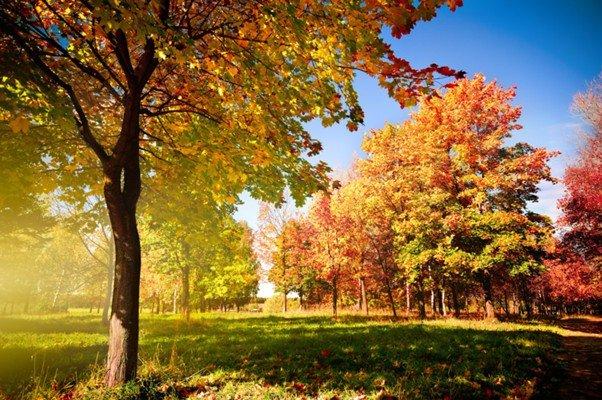 Праздничная программа «Осенний букет»
