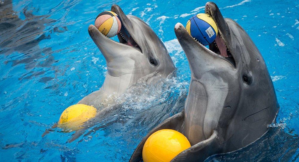 Шоу дельфинов ибелых китов «Тайна семи морей»