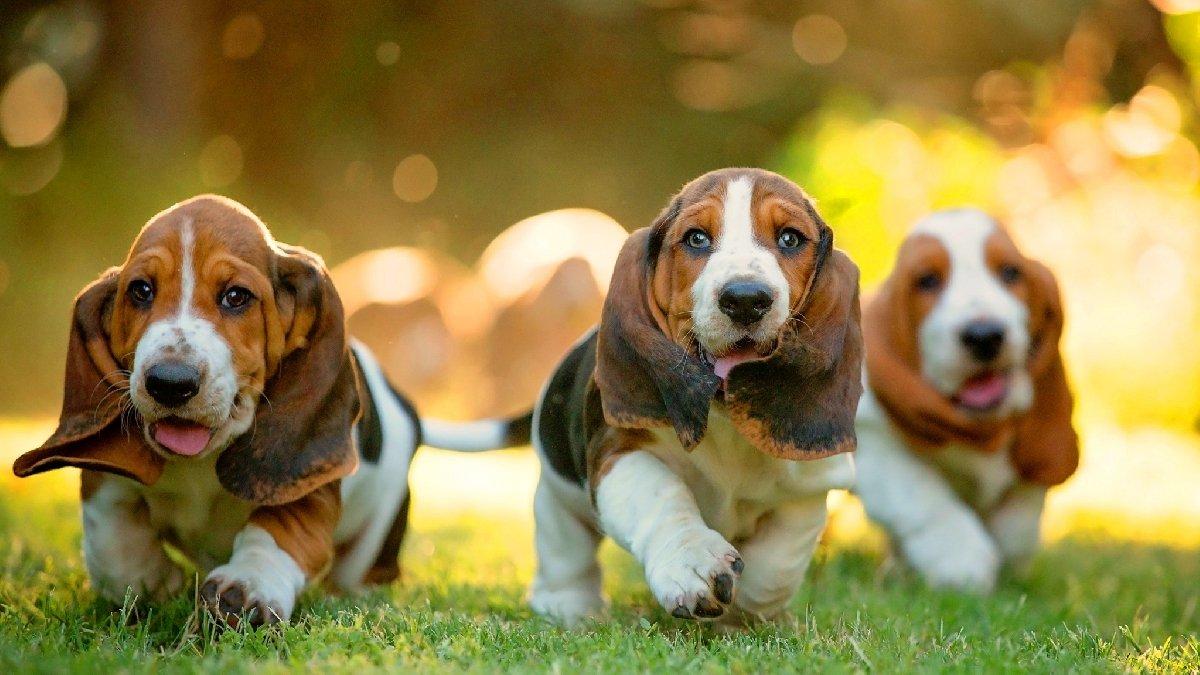 ходит самые красивые картинки всех собак этом