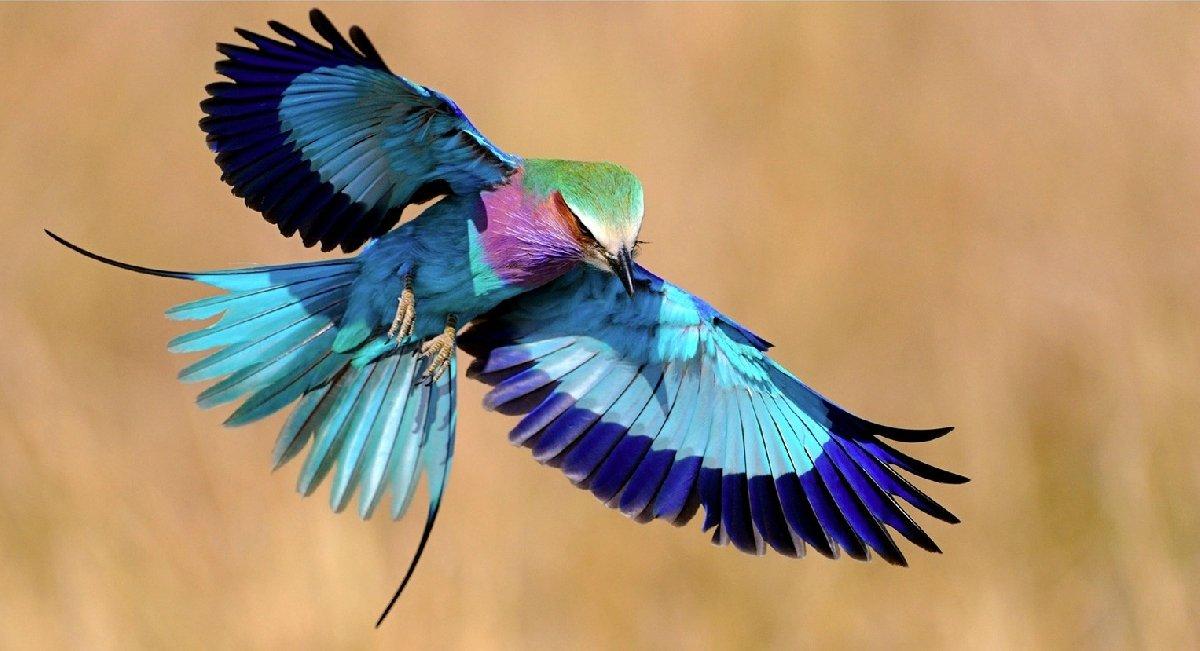 Экологический праздник «Международный день птиц» 2017