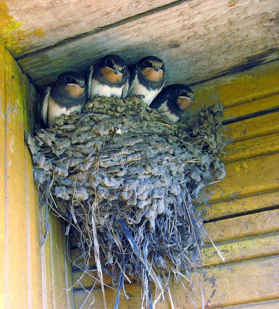Гнездо для птиц